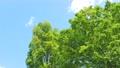 翠綠 鮮綠 真相 76781985