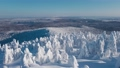 Horizonless Forest and Frozen Trees Covered with Snow on Clear Sunny Day in Winter. Aerial View 76824557