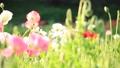 bloom, blossom, blossoms 76825592