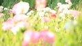 bloom, blossom, blossoms 76825593