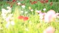 bloom, blossom, blossoms 76825594