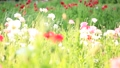 bloom, blossom, blossoms 76825595