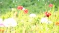 bloom, blossom, blossoms 76825596