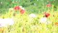 bloom, blossom, blossoms 76825597