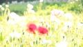 bloom, blossom, blossoms 76825598