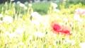 bloom, blossom, blossoms 76825599