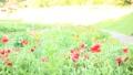 bloom, blossom, blossoms 76826558