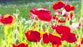 bloom, blossom, blossoms 76864738