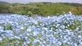 네모 피라의 꽃밭 76952562