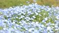 네모 피라의 꽃밭 76952563