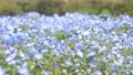 네모 피라의 꽃밭 76952564