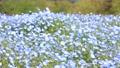 네모 피라의 꽃밭 76952565