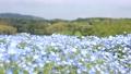 네모 피라의 꽃밭 76952566