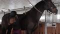 Girl preparing horse for riding 76986678