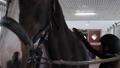 Girl preparing horse for riding 76986691