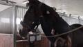 Girl preparing horse for riding 76986701