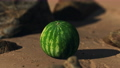 big and juicy watermelon on the beach sand 76992510