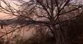 Calm lakeside autumn nature bare tree 76999035