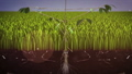 Planting seeding growing up to big trees. 77022679