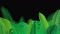熱帯に茂る植物の葉 動画素材 77038940