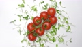 fresh tomatoes on white background, top view 77085619