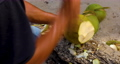 coconut, coconuts, sandy beach 77107684