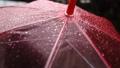 ピンク色の傘をさす人 77114617