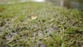 雨と草の地面 77116775