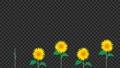 向日葵 illustration 數字動畫 77122676