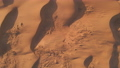Aerial top-down view on red desert dunes. Desertification concept. Climate change 77129113