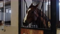 Equestrian concept - muzzle of brown horse with a white strip - stands in the stall 77135849