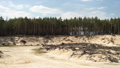 Deforestation. Sand mining career Uprooting roots trees. Time lapse 77142973