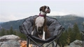 Cute and Adorable Female Boxer Dog laying on a cozy camping chair 77151623