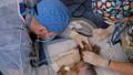 Ultrasonic Cleaning of Teeth in Yorkshire Terrier 77158608