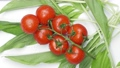 Beautiful natural vegetables tomatoes on a branch on Green wild garlic 77163500