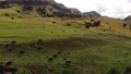 Aerial view of flight on an autumn pasture in the mountains. Caucasian cows graze in meadows high in the mountains. Natural pasture 77163595