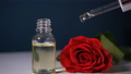 Oil Drops of aroma floral liquids falling from cosmetic pipette to glass bottle with perfume. Beautiful rose flowers 77166538
