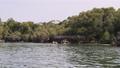 Lagoon at Kwale Island in Menai Bay, Mangroves with Reefs and Rocks, Zanzibar 77211675