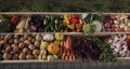 Top view: A counter with seasonal vegetables at the farmers' market. A selection of vegetables from local producers 77228169