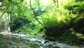 mountain stream, mountain torrent, clear stream 77256546