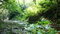 mountain stream, mountain torrent, clear stream 77256547