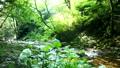 mountain stream, mountain torrent, clear stream 77256548