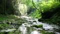 mountain stream, mountain torrent, clear stream 77256549