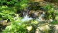 mountain stream, mountain torrent, clear stream 77256579