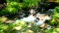 mountain stream, mountain torrent, clear stream 77256581