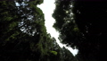 forest, wood, arboreal 77256582