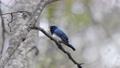 鳥兒 鳥 野生鳥類 77295909