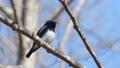 鳥兒 鳥 野生鳥類 77295910