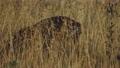 Roe Deer in a meadow landscape 77315023
