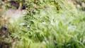 red leafe, tender green, verdure 77322131